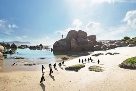 Pinguine Boulders Beach